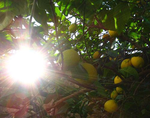il giallo dei limoni