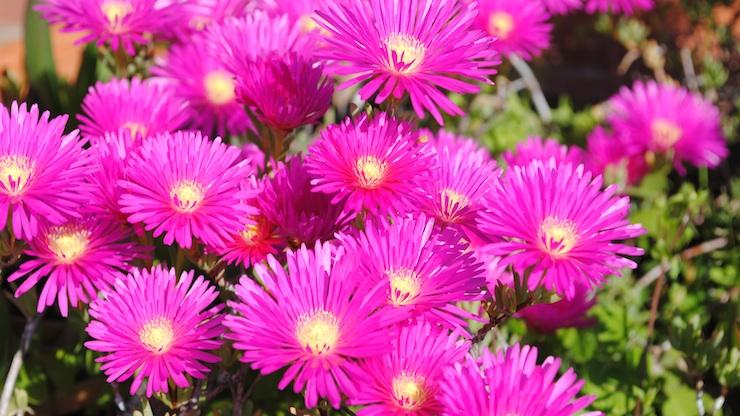 Piante grasse con fiori magri – Fiorella De Nicola