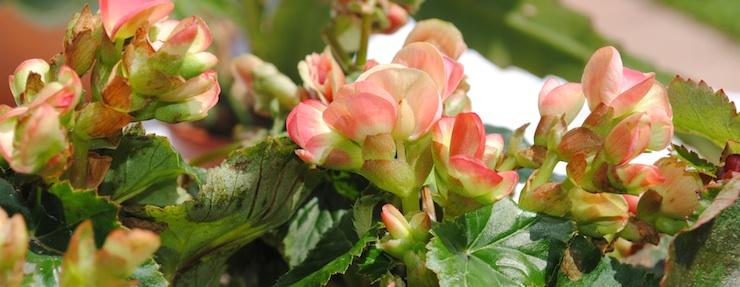 pianta grassa con fiori in giardino