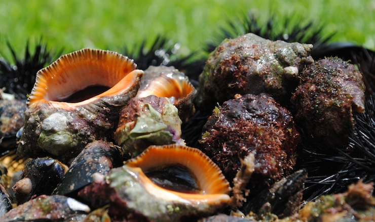pesca a cetara, costiera amalfitana: ricci, cozze, lumache