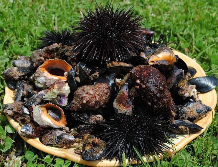 pesca a cetara: ricci, cozze, lumache
